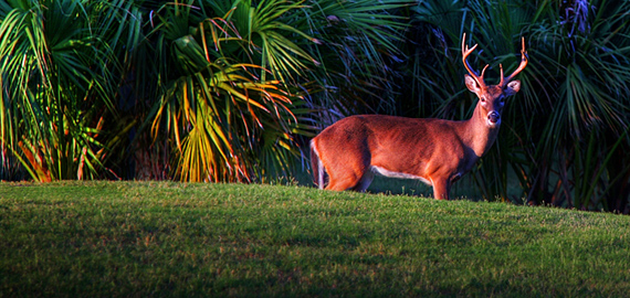 Wildlife on Fripp Island